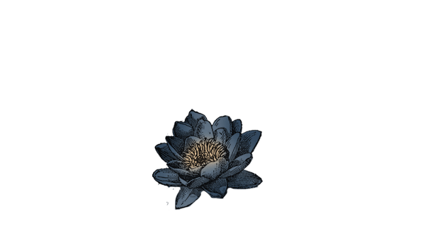 Addition of Blue Lotus