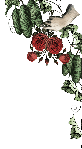 https://www.hendricksgin.com/resources/themes/hendricks/images/section-botanicals-top-roses-desktop.png