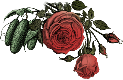 https://www.hendricksgin.com/resources/themes/hendricks/images/section-rare-stills-roses.png
